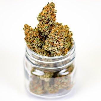 marijuana-3646055__340