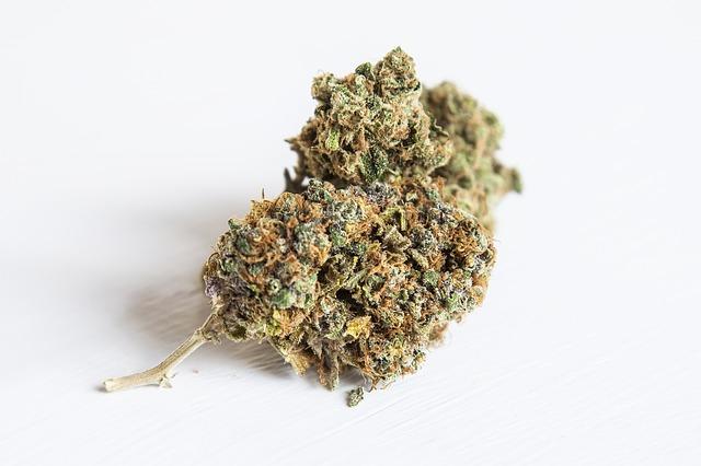 weed-2105966_640-1
